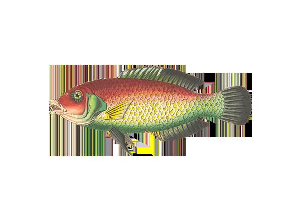 fish-1944245_960_720-600x361 copia
